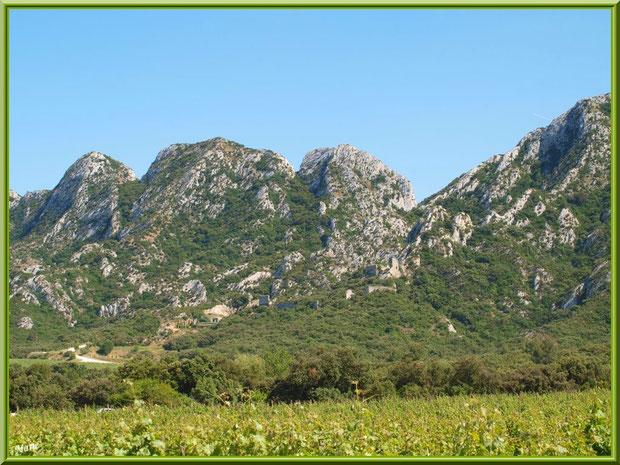 Le vignoble du Château Romanin, la cave souterraine au milieu et les Alpilles en toile de fond à Saint Rémy de Provence (13)