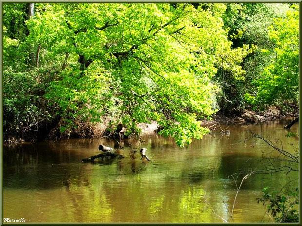 Verdure, bois et reflets en bordure de La Leyre, Sentier du Littoral au lieu-dit Lamothe, Le Teich, Bassin d'Arcachon (33)