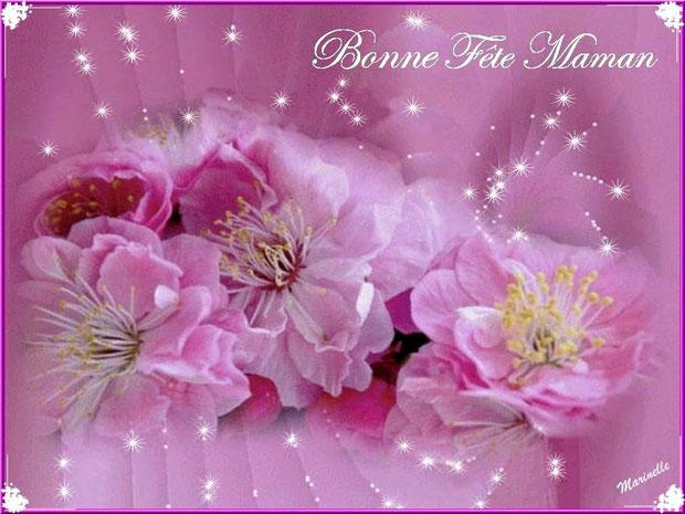 Fêtes des Mères, pivoines roses