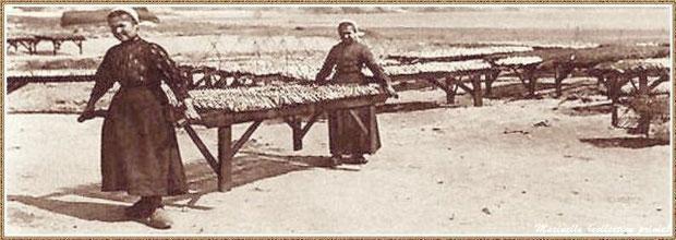 Femmes travaillant au séchage de la sardine, Bassin d'Arcachon (33)