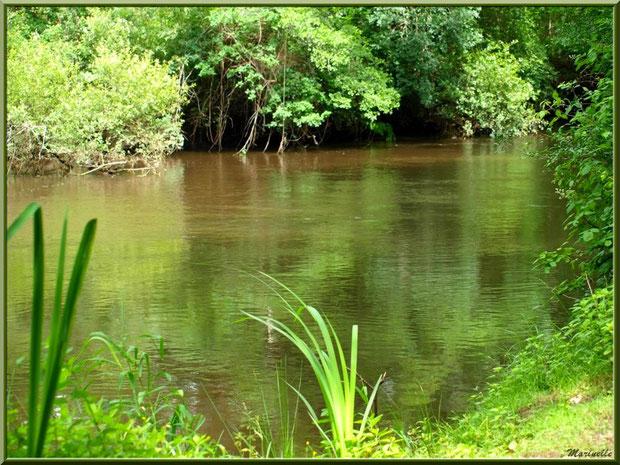 Verdoyance et reflets sur La Leyre, Sentier du Littoral au lieu-dit Lamothe, Le Teich, Bassin d'Arcachon (33)
