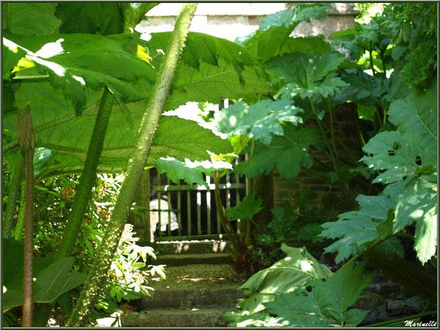 La Grotte Italienne cachée derriere les Rhubarbes géantes (Gunnera manicata) - Les Jardins du Kerdalo à Trédarzec, Côtes d'Armor (22)
