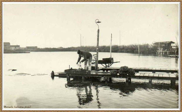Gujan-Mestras autrefois : Ostréiculteur sur une passerelle de réservoir, Bassin d'Arcachon (photo collection privée)