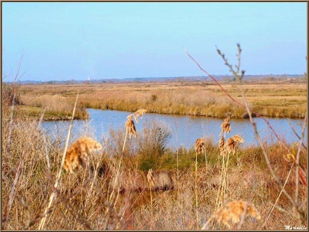Un réservoir aux couleurs hivernales, Sentier du Littoral, secteur Domaine de Certes et Graveyron, Bassin d'Arcachon (33)