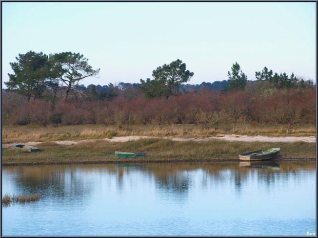 Canots dans les prés salés en bordure du sentier du littoral depuis le port d'Arès, Bassin d'Arcachon