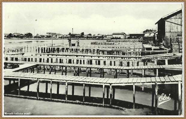 Gujan-Mestras autrefois : Réservoirs à huîtres avec ses passerelles, Bassin d'Arcachon (carte postale, collection privée)