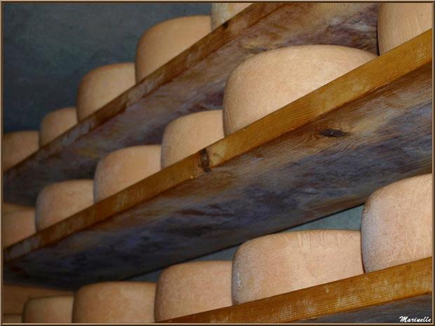 Fromage de brebis dans un saloir d'alpage sur les hauteurs de Gourette (dans la bergerie de mon ami Christian Arripe), Vallée d'Ossau (64)