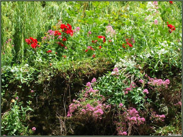 Mur fleuri et végétation luxuriante en bordure du Trieux, Pontrieux, Côte d'Armor (22)