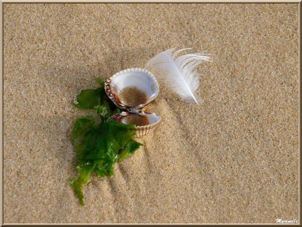 Coquilles de coque, plume et salade de mer sur la plage Péreire à Arcachon, Bassin d'Arcachon (33)