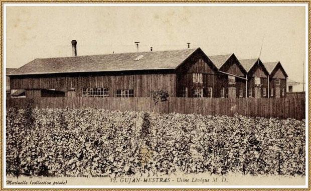 Gujan-Mestras autrefois : en 1909, l'Usine-Conserverie Lévéque, Bassin d'Arcachon (carte postale, collection privée)