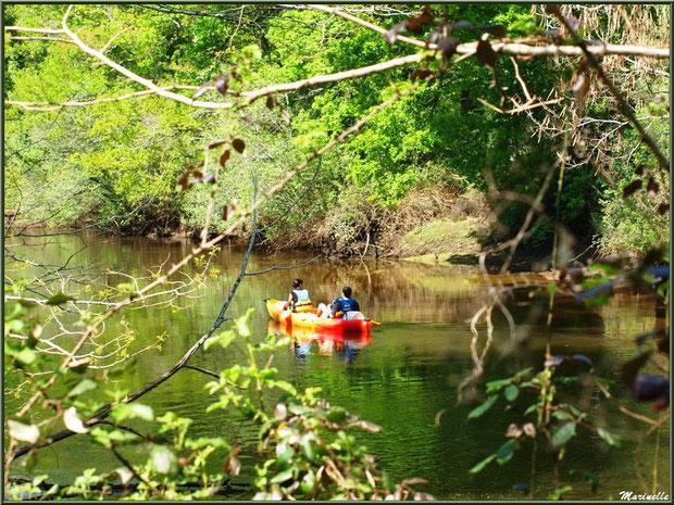 Promenade en canoë sur La Leyre, Sentier du Littoral au lieu-dit Lamothe, Le Teich, Bassin d'Arcachon (33)