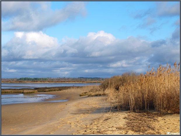 Plage, Bassin et roseaux, côté Bassin, Sentier du Littoral en hiver, secteur Moulin de Cantarrane, Bassin d'Arcachon