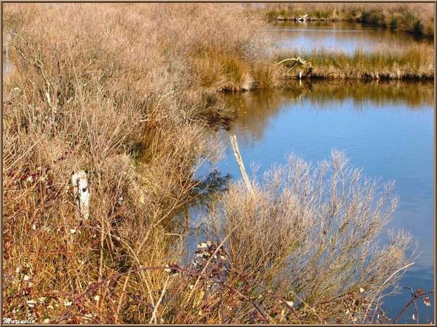 Végétation hivernale en bordure des réservoirs, Sentier du Littoral, secteur Domaine de Certes et Graveyron, Bassin d'Arcachon (33)
