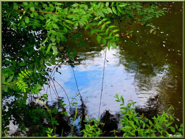 Trouée dans la verdure et reflets en bordure de La Leyre, Sentier du Littoral au lieu-dit Lamothe, Le Teich, Bassin d'Arcachon (33)