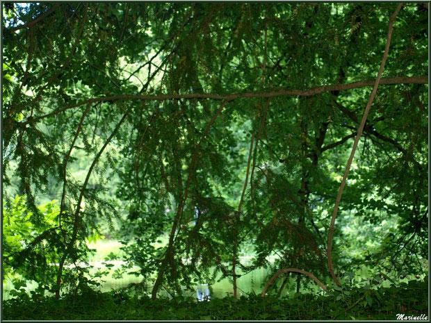 Le sentier de la Vallée du Bas : on devine le Grand Etang derrière les arbres - Les Jardins du Kerdalo à Trédarzec, Côtes d'Armor (22)