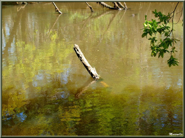 Bois, verdure et reflets sur La Leyre, Sentier du Littoral au lieu-dit Lamothe, Le Teich, Bassin d'Arcachon (33)