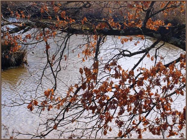 Branche de chêne hivernal penchée sur un réservoir, Sentier du Littoral, secteur Domaine de Certes et Graveyron, Bassin d'Arcachon (33)