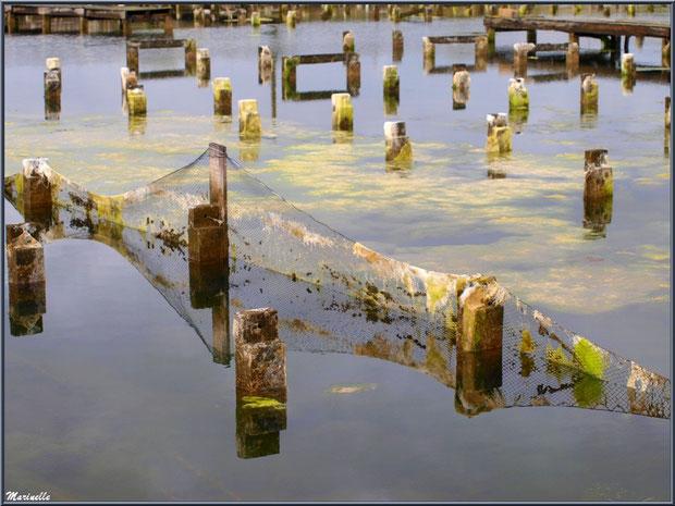 Reflets dans d'anciens réservoirs ostréicoles au Port du Canal (Gujan-Mestras, Bassin d'Arcachon)