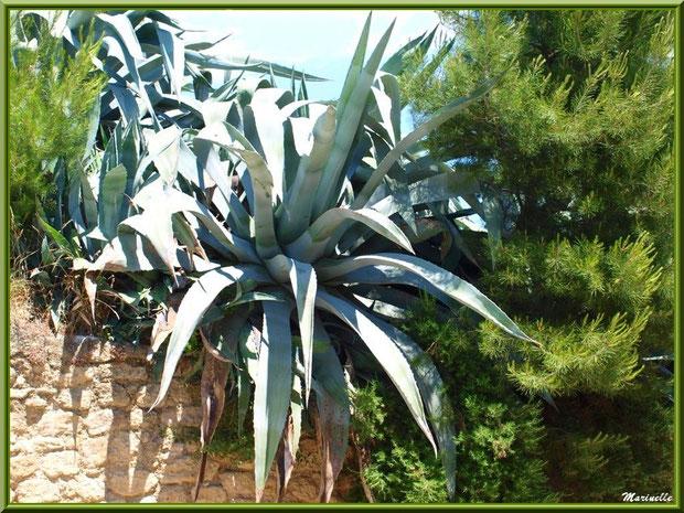 Végétation luxuriante au-dessus d'une murette dans le village de Cucuron, Lubéron (84)