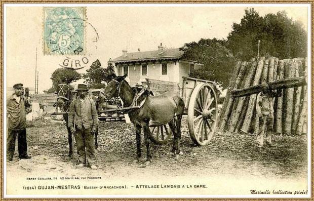 Gujan-Mestras autrefois : en 1903, attelage landais à la gare, Bassin d'Arcachon (carte postale, collection privée)