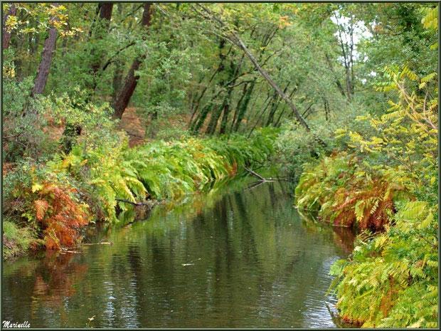 Parure automnale du Canal des Landes au Parc de la Chêneraie à Gujan-Mestras (Bassin d'Arcachon)
