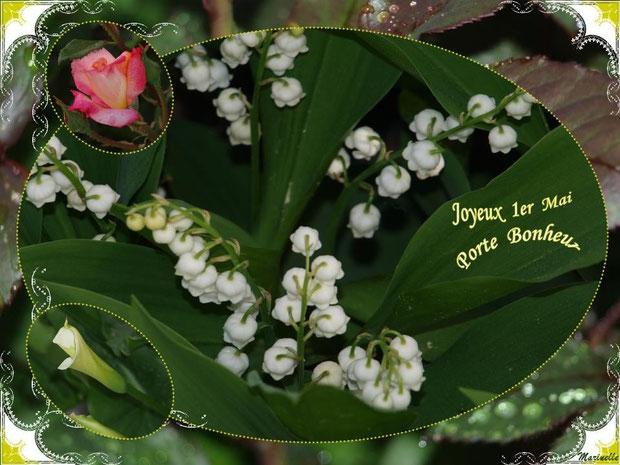 Muguet 1er mai et fleurs, porte bonheur