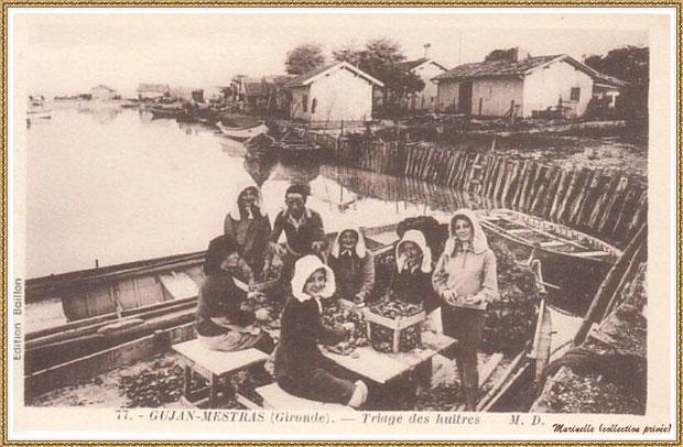 Gujan-Mestras autrefois : Triage des huîtres, Bassin d'Arcachon (carte postale, collection privée)