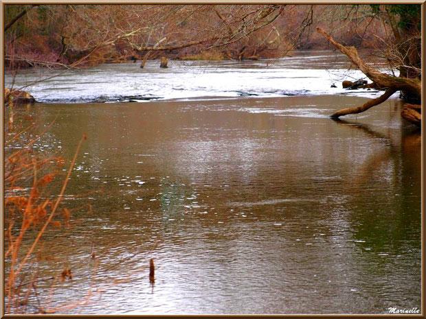 La Leyre et ses reflets en hiver, Sentier du Littoral au lieu-dit Lamothe, Le Teich, Bassin d'Arcachon (33)