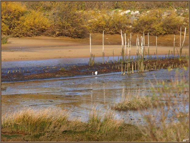 """Petit chenal, appelé """"estey"""", et une aigrette, côté Bassin sur le Sentier du Littoral, secteur Moulin de Cantarrane, Bassin d'Arcachon"""