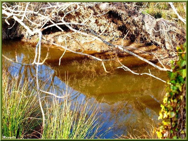 Végétation et reflets sur le ruisseau bordant le sentier forestier, Sentier du Littoral secteur Pont Neuf, Le Teich, Bassin d'Arcachon (33)