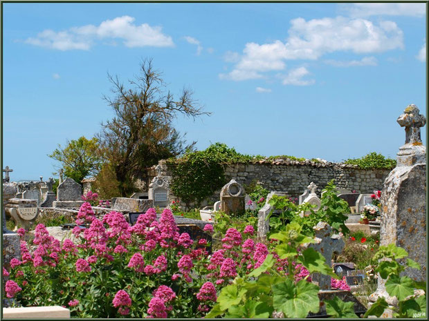 Le cimetière marin ou ancien cimetière à Talmont-sur-Gironde, Charente-Maritime