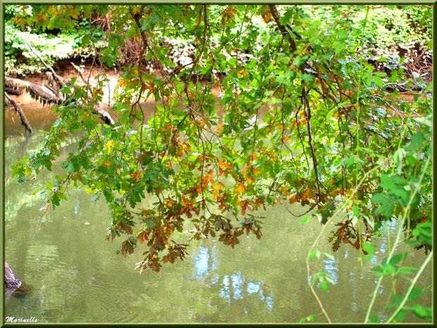 Branche de chêne, verdure et reflets en en bordure de La Leyre, Sentier du Littoral au lieu-dit Lamothe, Le Teich, Bassin d'Arcachon