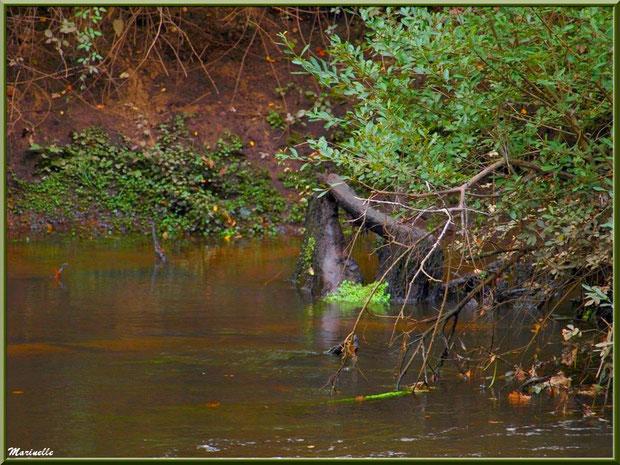 Bois et reflets d'automne en bordure de La Leyre, Sentier du Littoral au lieu-dit Lamothe, Le Teich, Bassin d'Arcachon (33)
