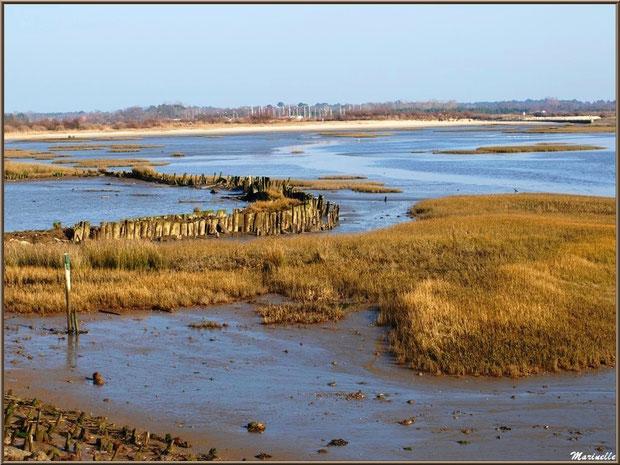 Marécage côté Bassin avec la plage et le port d'Audenge en fond, Sentier du Littoral, secteur Domaine de Certes et Graveyron, Bassin d'Arcachon (33)