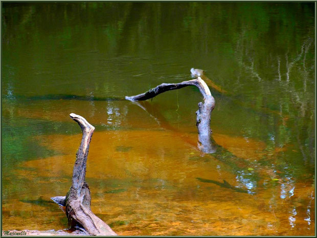 Bois et reflets en début d'automne, en bordure de La Leyre, Sentier du Littoral au lieu-dit Lamothe, Le Teich, Bassin d'Arcachon (33)