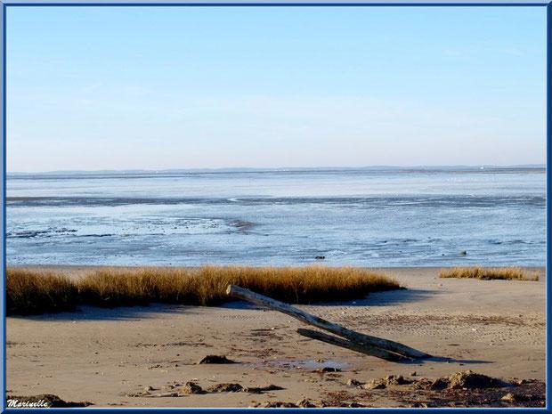 La plage hivernale, oyats et piquets dans le sable, le Bassin, Sentier du Littoral, secteur Moulin de Cantarrane, Bassin d'Arcachon