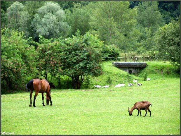 Cheval, chèvre et oies à la Pisciculture des Sources à Laruns, Vallée d'Ossau (64)