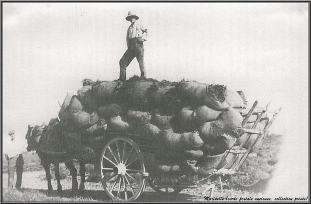 Charette transportant les sacs de lavande récoltée (carte postale ancienne, collection privée)