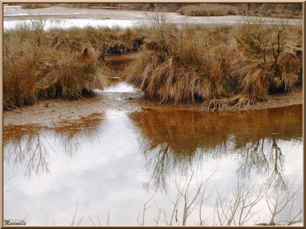 Reflets dans un réservoir à marée basse, Sentier du Littoral, secteur Moulin de Cantarrane, Bassin d'Arcachon