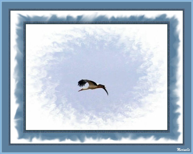 Cigogne en plein vol