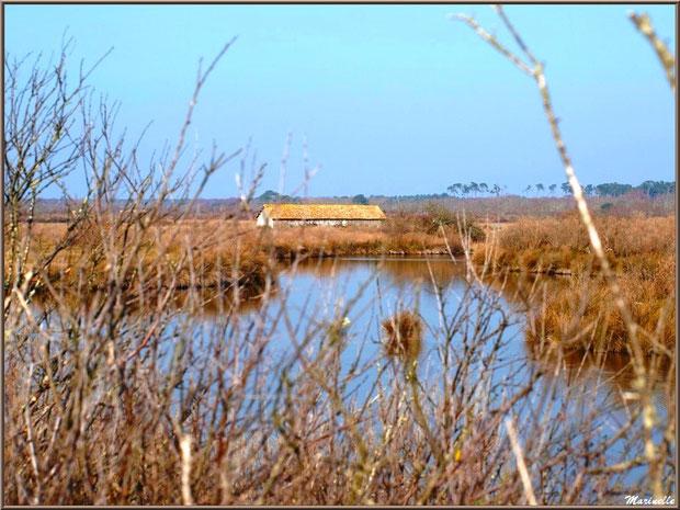 Maison d'un garde pêche-chasse au coeur des réservoirs, Sentier du Littoral, secteur Domaine de Certes et Graveyron, Bassin d'Arcachon (33)