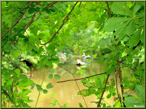 Et derrière la verdure, voguent les canoës sur La Leyre, Sentier du Littoral au lieu-dit Lamothe, Le Teich, Bassin d'Arcachon (33)