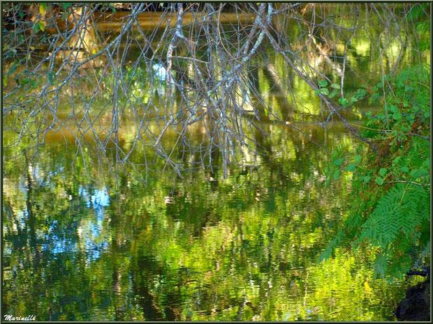 Fougères et reflets en bordure de La Leyre, Sentier du Littoral au lieu-dit Lamothe, Le Teich, Bassin d'Arcachon (33)