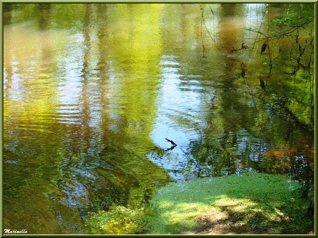 Mousses aquatiques et reflets en bordure de La Leyre, Sentier du Littoral au lieu-dit Lamothe, Le Teich, Bassin d'Arcachon (33)
