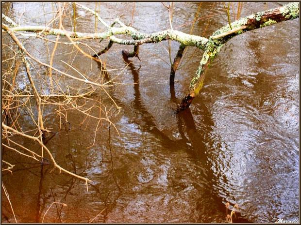 Bois et reflets en hiver sur La Leyre, Sentier du Littoral au lieu-dit Lamothe, Le Teich, Bassin d'Arcachon (33)
