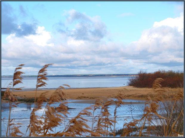 Bordure du sentier, sa végétation hivernale et une parcelle de plage, côté bassin, en hiver sur le Sentier du Littoral, secteur Moulin de Cantarrane, Bassin d'Arcachon