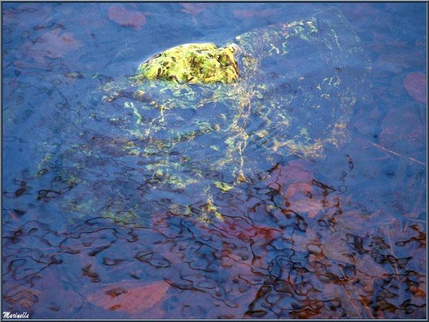 Pierres et reflets dans le Canal des Landes au Parc de la Chêneraie à Gujan-Mestras (Bassin d'Arcachon)