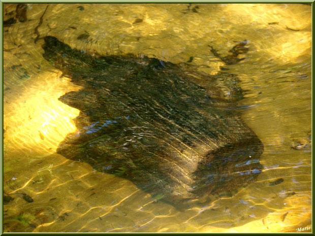 Bois et reflets d'or dans le Canal des Landes au Parc de la Chêneraie à Gujan-Mestras (Bassin d'Arcachon)