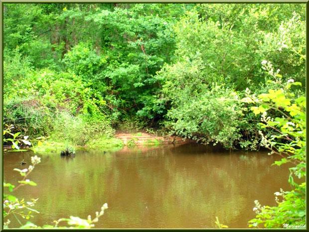 Végétation luxuriante et reflets en bordure de La Leyre, Sentier du Littoral au lieu-dit Lamothe, Le Teich, Bassin d'Arcachon (33)