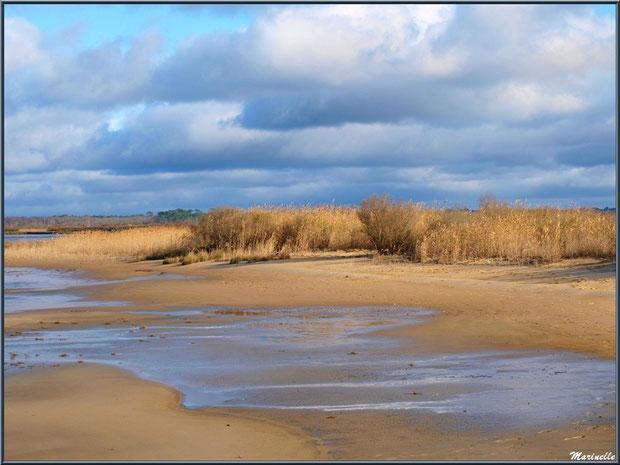 La plage avec ses roseaux et arbrisseaux en bordure, Sentier du Littoral, secteur Moulin de Cantarrane, Bassin d'Arcachon